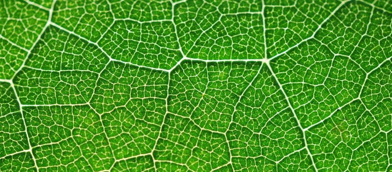 Versuche zur Fotosynthese – Experiment mit Unterrichtsmaterial